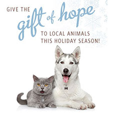 A Holiday Wish from the Animals