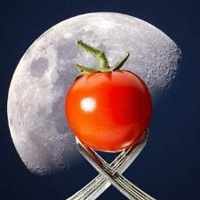 Tomato Tasting and Moonlit Hike