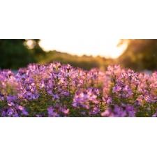 Wildflower Hike at Glen Helen