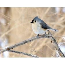 Early Spring Bird Hike at Glen Helen Nature Preserve