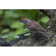Fall Bird Walk at Glen Helen