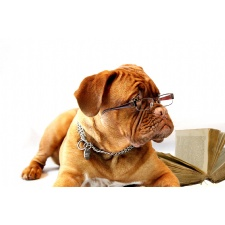 #DogsReadingBooks Wagtown Hashtag Challenge