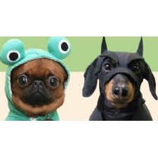 Sniff-A-Treat & Costume Contest