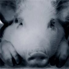 PA's Pork