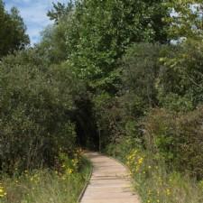 Cedar Bog Nature Preserve