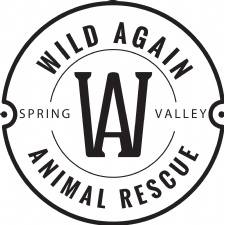 Wild Again rescue
