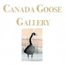 Canada Goose Gallery