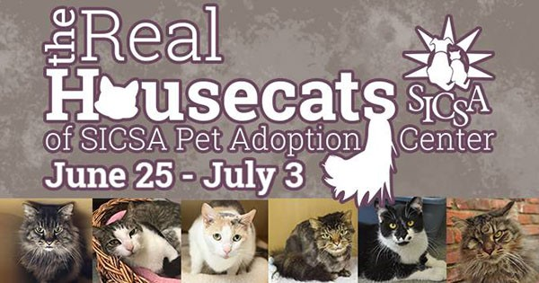 Adopt an adult cat for free at SICSA
