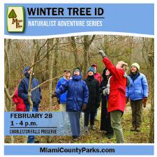 Naturalist Adventure Series Winter Tree Identification