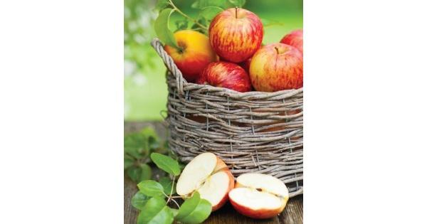 Aullwood Apple Fest