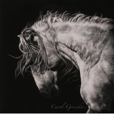 7th Annual Exhibition of International Scratchboard Art