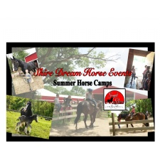 Shire Dream Horse Events & Camps