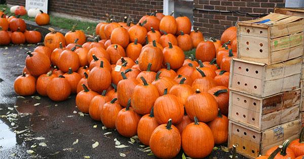 Bradford Pumpkin Show