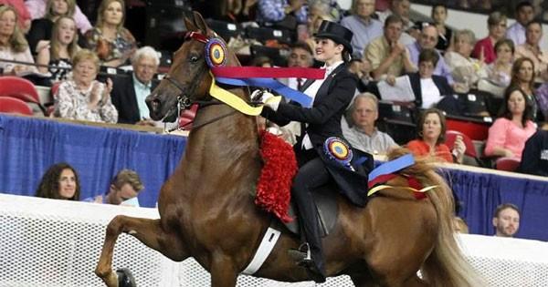 Dayton Horse Show