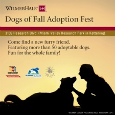 WilmerHale Dogs of Fall Adoption Fest
