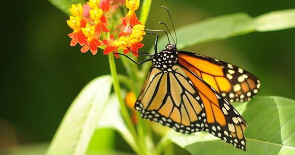 Visit the Butterfly House at Cox Arboretum