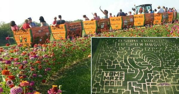 Toms Maze & Pumpkin Farm