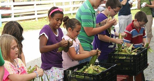 Fulton Farm Sweet Corn Festival