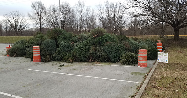 Recycle your Christmas Trees with Metroparks